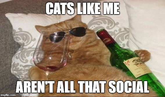 CATS LIKE ME AREN'T ALL THAT SOCIAL | made w/ Imgflip meme maker