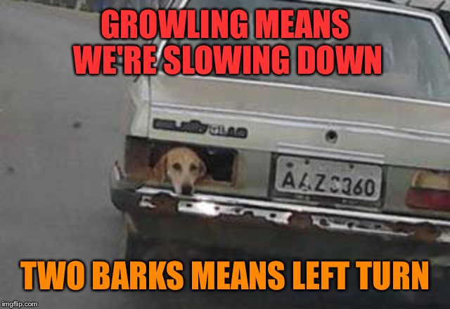 And if he can nip at your bumper, you're following too close. |  GROWLING MEANS WE'RE SLOWING DOWN; TWO BARKS MEANS LEFT TURN | image tagged in car meme,dog,puppy,trunk,car memes,automotive | made w/ Imgflip meme maker