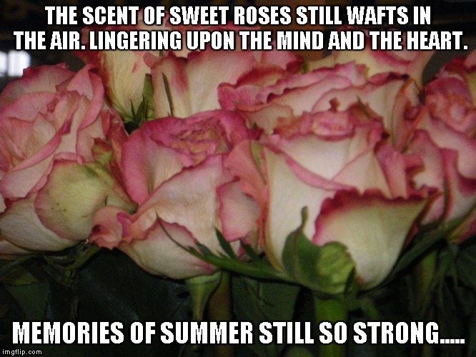 Sweet Roses | THE SCENT OF SWEET ROSES STILL WAFTS IN THE AIR. LINGERING UPON THE MIND AND THE HEART. MEMORIES OF SUMMER STILL SO STRONG..... | image tagged in roses,heart,memories,summer | made w/ Imgflip meme maker
