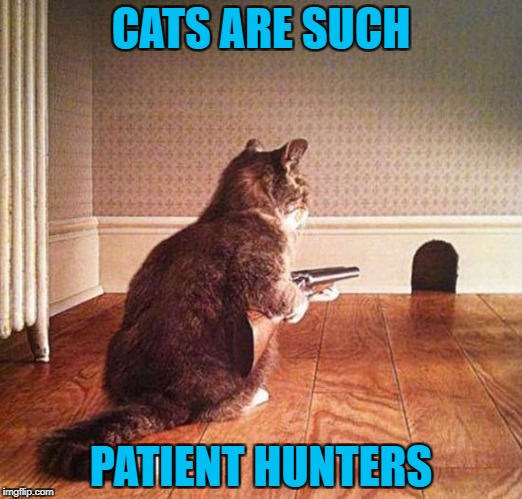 When I was a kid I laid down some cheese and waited for 3 hours with my BB gun to blast a mouse! | CATS ARE SUCH PATIENT HUNTERS | image tagged in cat hunter,memes,cats,animals,funny,mouse hunter | made w/ Imgflip meme maker