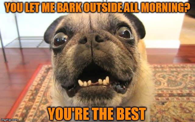 YOU LET ME BARK OUTSIDE ALL MORNING? YOU'RE THE BEST | made w/ Imgflip meme maker