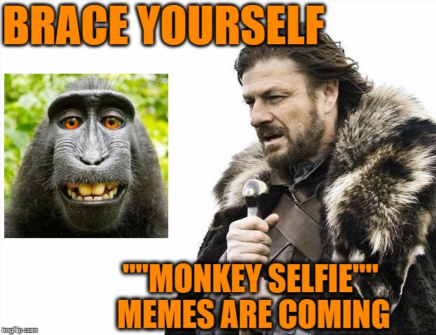 "Now that PETA has agreed to settle over the pics | BRACE YOURSELF """"MONKEY SELFIE"""" MEMES ARE COMING 