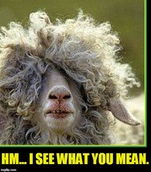 I'm a Poor Little Lamb Who has Lost His Way | HM... I SEE WHAT YOU MEAN. | image tagged in vince vance,sheep,long hair sheep,hair covers eyes,blinded by the light | made w/ Imgflip meme maker