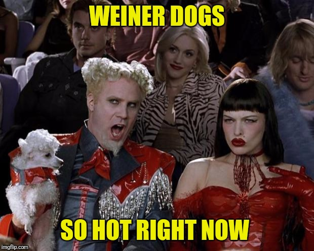 Mugatu So Hot Right Now Meme | WEINER DOGS SO HOT RIGHT NOW | image tagged in memes,mugatu so hot right now | made w/ Imgflip meme maker