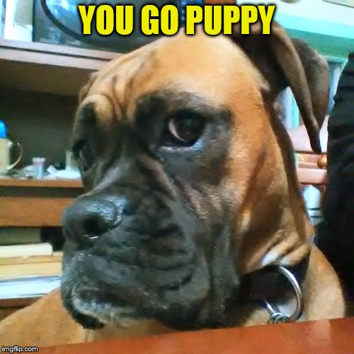 YOU GO PUPPY | made w/ Imgflip meme maker