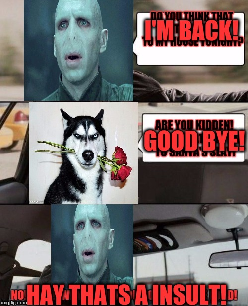 The Voldermort Driving Returns  |  I'M BACK! GOOD BYE! HAY THATS A INSULT! | image tagged in voldemort driving,grumpy dog | made w/ Imgflip meme maker
