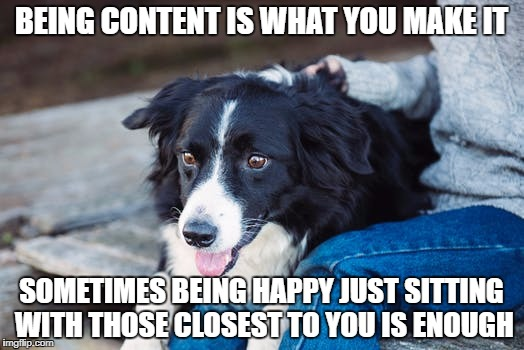The ease of being content | BEING CONTENT IS WHAT YOU MAKE IT SOMETIMES BEING HAPPY JUST SITTING WITH THOSE CLOSEST TO YOU IS ENOUGH | image tagged in happy,happiness,content,dog,life,happy dog | made w/ Imgflip meme maker