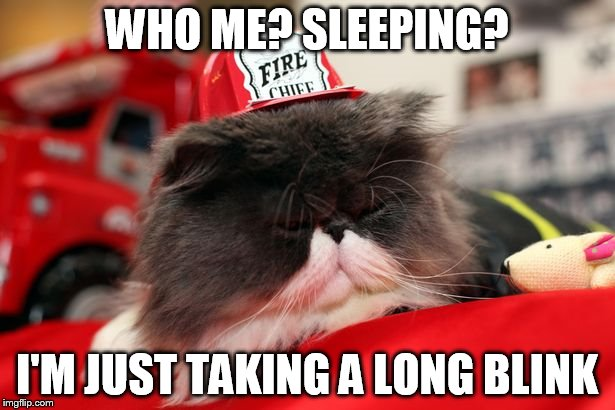 Sneaky sleeping cat | WHO ME? SLEEPING? I'M JUST TAKING A LONG BLINK | image tagged in firefighter,cat | made w/ Imgflip meme maker