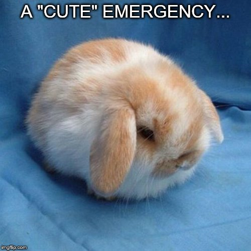 "Cute | A ""CUTE"" EMERGENCY... 