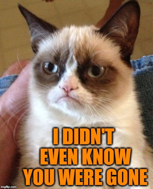 Grumpy Cat Meme | I DIDN'T EVEN KNOW YOU WERE GONE | image tagged in memes,grumpy cat | made w/ Imgflip meme maker