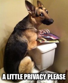 Dog on toilette | A LITTLE PRIVACY PLEASE | image tagged in german shepard,dogs,bathroom,privacy | made w/ Imgflip meme maker
