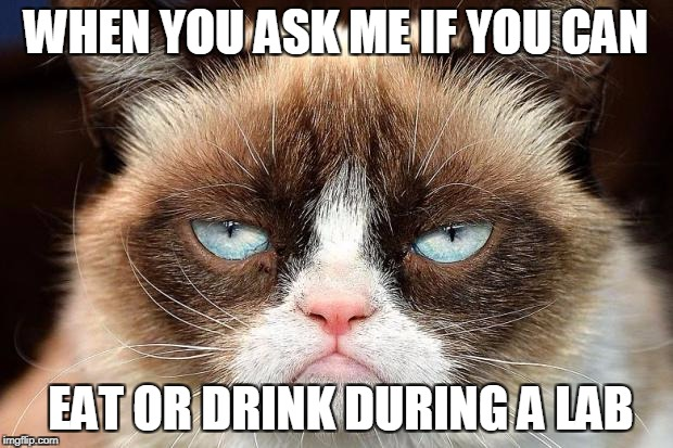 Grumpy Cat Not Amused Meme | WHEN YOU ASK ME IF YOU CAN EAT OR DRINK DURING A LAB | image tagged in memes,grumpy cat not amused,grumpy cat | made w/ Imgflip meme maker