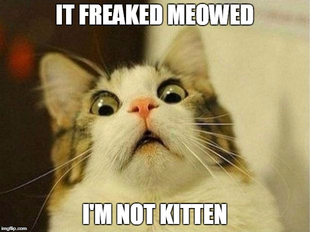 Scared Cat Meme | IT FREAKED MEOWED I'M NOT KITTEN | image tagged in memes,scared cat | made w/ Imgflip meme maker