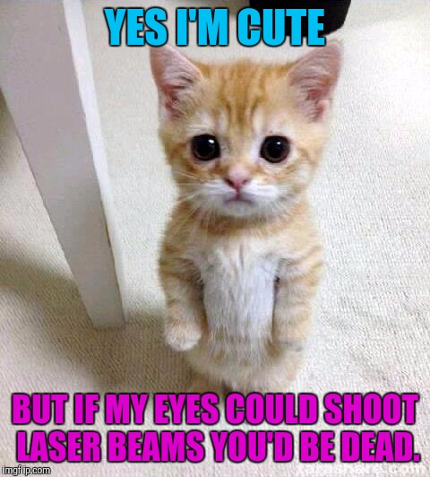 Cute Cat Meme | YES I'M CUTE BUT IF MY EYES COULD SHOOT LASER BEAMS YOU'D BE DEAD. | image tagged in funny,cute cat,cats,animals,humor,memes | made w/ Imgflip meme maker