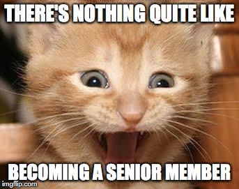 Excited Cat Meme | THERE'S NOTHING QUITE LIKE BECOMING A SENIOR MEMBER | image tagged in memes,excited cat | made w/ Imgflip meme maker