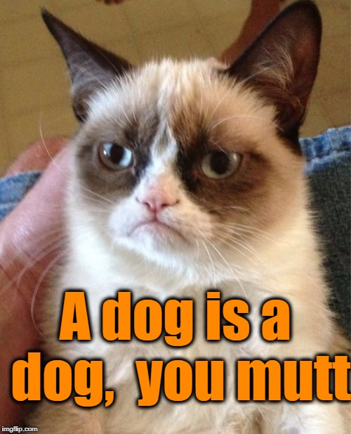 Grumpy Cat Meme | A dog is a dog,  you mutt | image tagged in memes,grumpy cat | made w/ Imgflip meme maker