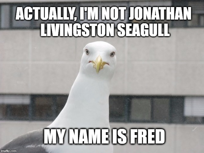 ACTUALLY, I'M NOT JONATHAN LIVINGSTON SEAGULL MY NAME IS FRED | image tagged in seagull,steven seagal,my face when,what if i told you | made w/ Imgflip meme maker