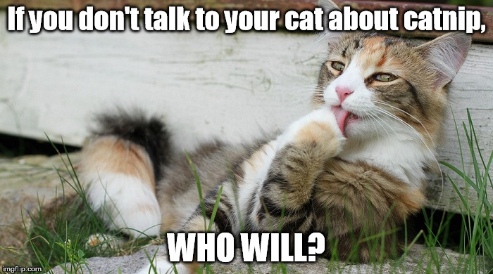 If you don't talk to your cat about catnip, WHO WILL? | image tagged in catnip | made w/ Imgflip meme maker