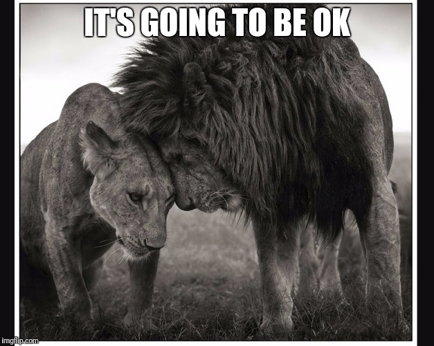 IT'S GOING TO BE OK | image tagged in king queen | made w/ Imgflip meme maker