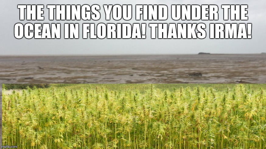 High Tide | THE THINGS YOU FIND UNDER THE OCEAN IN FLORIDA! THANKS IRMA! | image tagged in ocean,hurricane irma,weed | made w/ Imgflip meme maker