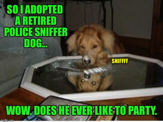 Puppy week? I named mine 'Scarface'. | SO I ADOPTED A RETIRED POLICE SNIFFER DOG... WOW, DOES HE EVER LIKE TO PARTY. SNIFFFF | image tagged in dog,puppy week,cocaine,police,police dogs,drugs | made w/ Imgflip meme maker