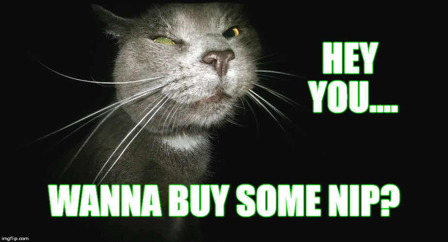 Stalker Cat | HEY YOU.... WANNA BUY SOME NIP? | image tagged in stalker cat | made w/ Imgflip meme maker