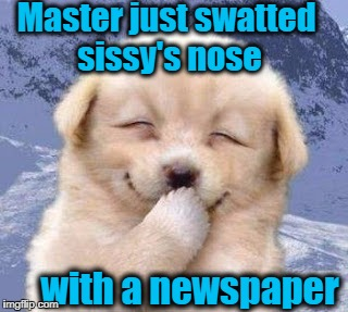 Puppy Week, A Lordcakethief Event! From September 11th -17th! | Master just swatted sissy's nose with a newspaper | image tagged in puppy,smirk,brat | made w/ Imgflip meme maker