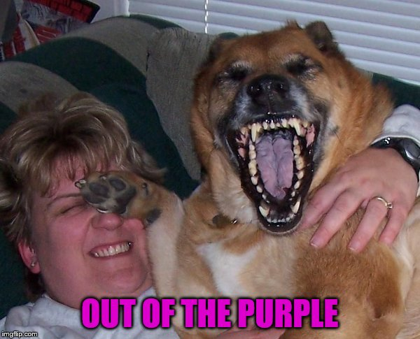 laughing dog | OUT OF THE PURPLE | image tagged in laughing dog | made w/ Imgflip meme maker