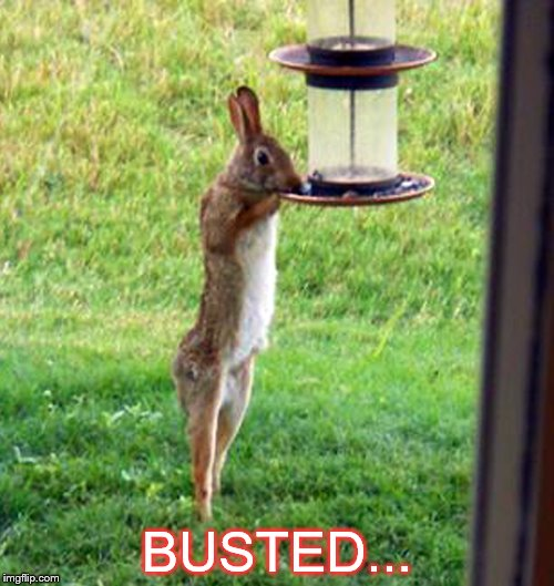 Caught in the act | BUSTED... | image tagged in funny memes,funny animals | made w/ Imgflip meme maker