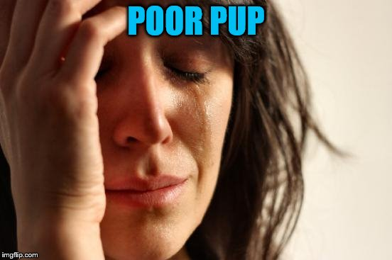 First World Problems Meme | POOR PUP | image tagged in memes,first world problems | made w/ Imgflip meme maker