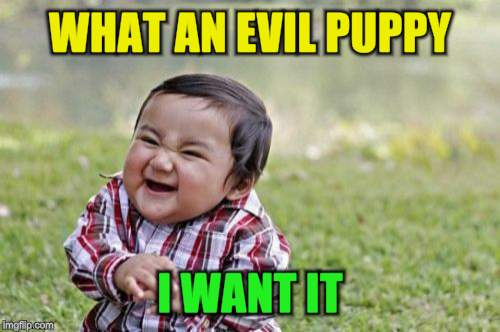 Evil Toddler Meme | WHAT AN EVIL PUPPY I WANT IT | image tagged in memes,evil toddler | made w/ Imgflip meme maker