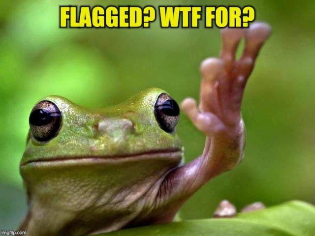 FLAGGED? WTF FOR? | made w/ Imgflip meme maker