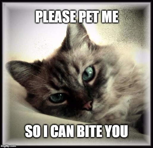 PLEASE PET ME SO I CAN BITE YOU | image tagged in cat,bite,fluffy,feline,the most interesting cat in the world,i should buy a boat cat | made w/ Imgflip meme maker