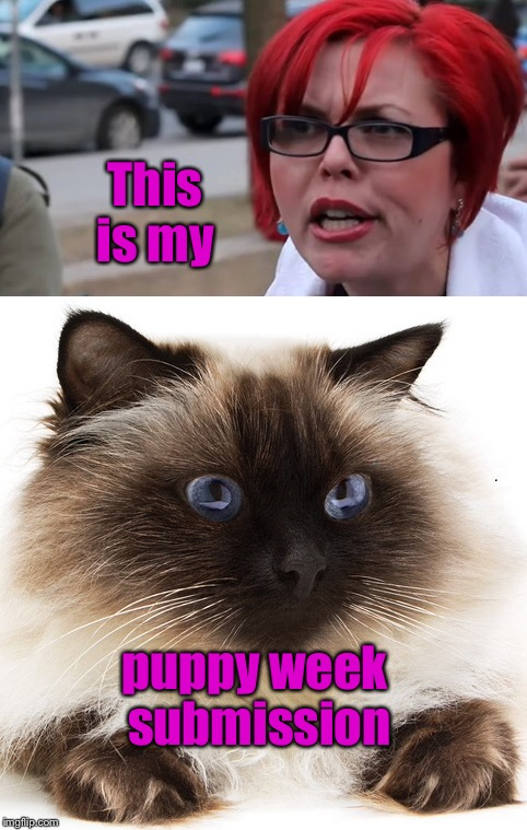 For our trans-species pet owners | This is my puppy week submission | image tagged in memes,triggered liberal,puppy week,cat submission | made w/ Imgflip meme maker