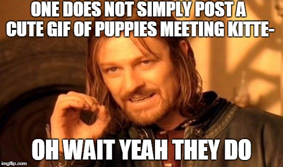 One Does Not Simply Meme | ONE DOES NOT SIMPLY POST A CUTE GIF OF PUPPIES MEETING KITTE- OH WAIT YEAH THEY DO | image tagged in memes,one does not simply | made w/ Imgflip meme maker