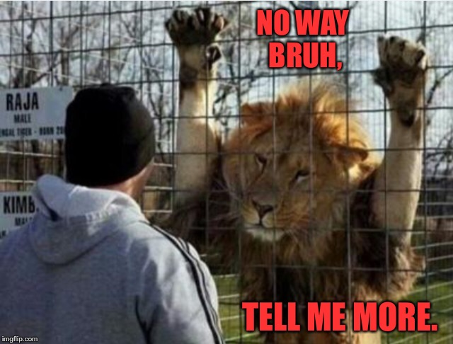 Raja's a bit of a D bag, but he's a good listener. |  NO WAY BRUH, TELL ME MORE. | image tagged in lion,zoo,bruh,no way,funny animals,animal | made w/ Imgflip meme maker