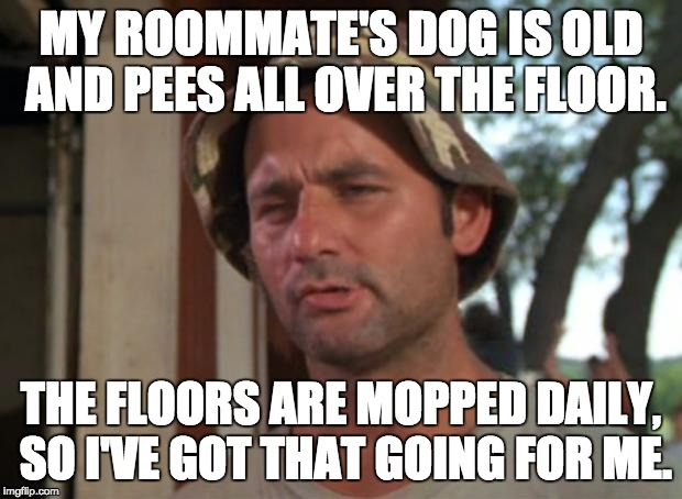 So I Got That Goin For Me Which Is Nice Meme | MY ROOMMATE'S DOG IS OLD AND PEES ALL OVER THE FLOOR. THE FLOORS ARE MOPPED DAILY, SO I'VE GOT THAT GOING FOR ME. | image tagged in memes,so i got that goin for me which is nice,AdviceAnimals | made w/ Imgflip meme maker