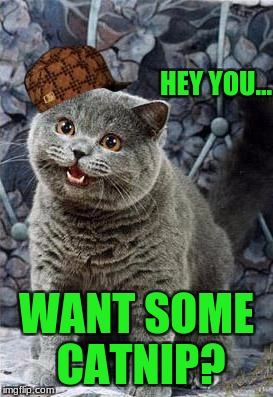 happycat | HEY YOU... WANT SOME CATNIP? | image tagged in happycat,scumbag | made w/ Imgflip meme maker