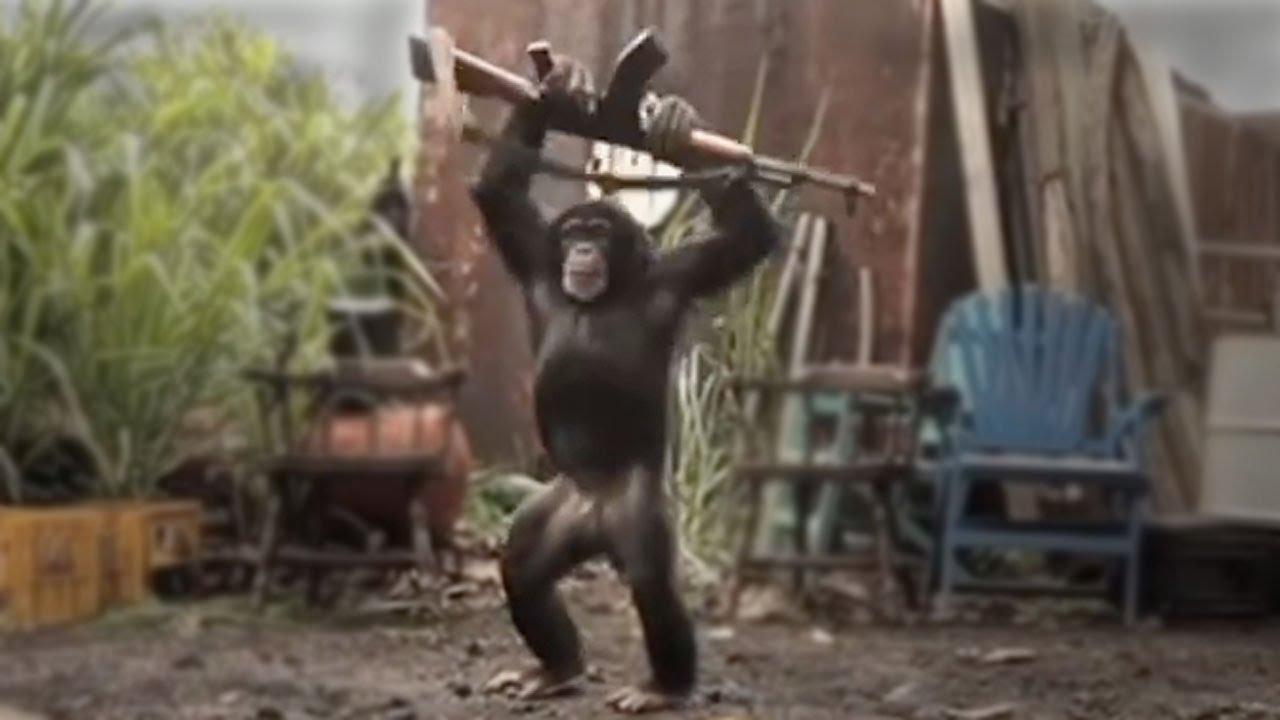 High Quality Monkey With AK 47 Blank Meme Template
