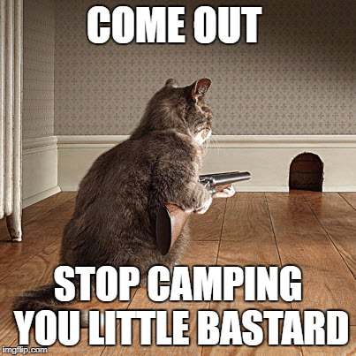 Camper | COME OUT STOP CAMPING YOU LITTLE BASTARD | image tagged in cats,camper,shotgun,memes | made w/ Imgflip meme maker