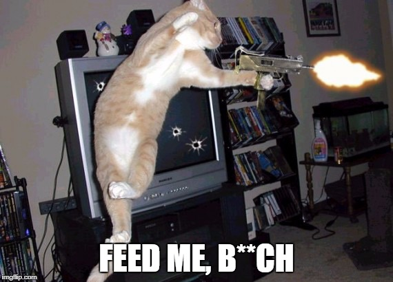 FEED ME, B**CH | image tagged in call of duty kitty style | made w/ Imgflip meme maker