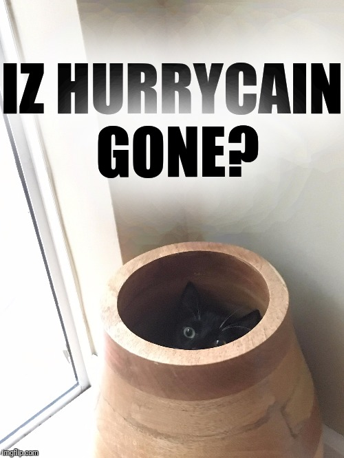 Some days I want to hide too. | IZ HURRYCAIN GONE? | image tagged in memes,cats,hurricane,hiding,pottery,pets | made w/ Imgflip meme maker