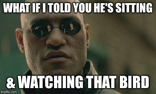 Matrix Morpheus Meme | WHAT IF I TOLD YOU HE'S SITTING & WATCHING THAT BIRD | image tagged in memes,matrix morpheus | made w/ Imgflip meme maker