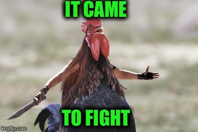 IT CAME TO FIGHT | image tagged in a | made w/ Imgflip meme maker