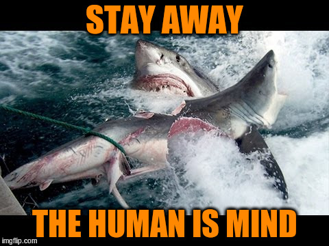 STAY AWAY THE HUMAN IS MIND | made w/ Imgflip meme maker