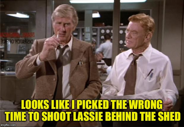 LOOKS LIKE I PICKED THE WRONG TIME TO SHOOT LASSIE BEHIND THE SHED | made w/ Imgflip meme maker