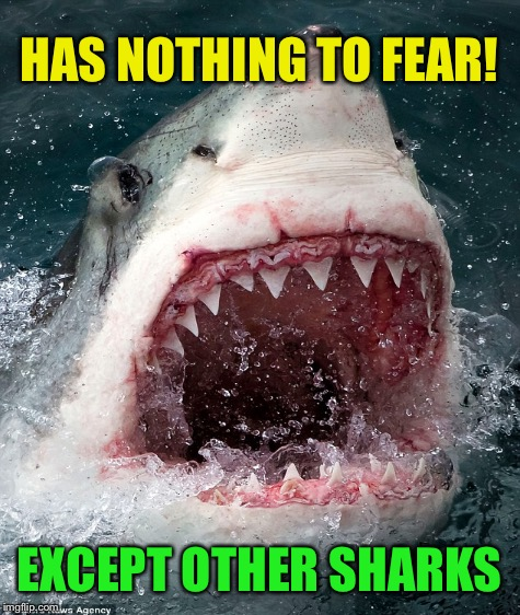 HAS NOTHING TO FEAR! EXCEPT OTHER SHARKS | made w/ Imgflip meme maker