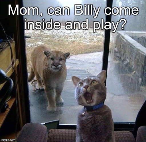 Mom, can Billy come inside and play? | image tagged in house cat with mountain lion at the door | made w/ Imgflip meme maker