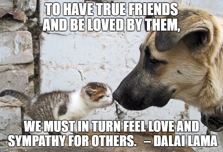 TO HAVE TRUE FRIENDS AND BE LOVED BY THEM, WE MUST IN TURN FEEL LOVE AND SYMPATHY FOR OTHERS.   – DALAI LAMA | image tagged in jeri | made w/ Imgflip meme maker