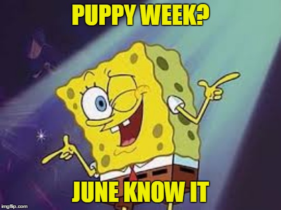PUPPY WEEK? JUNE KNOW IT | made w/ Imgflip meme maker